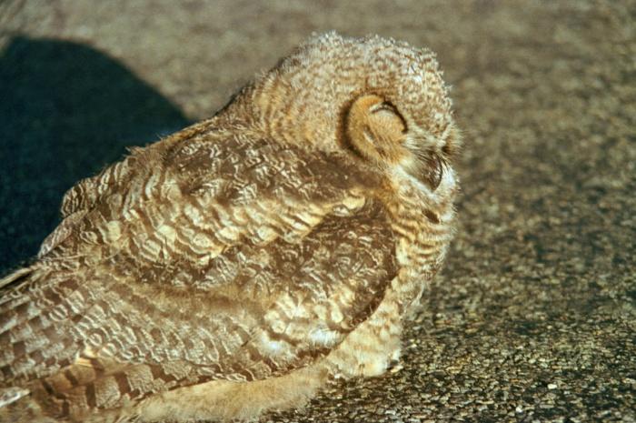 owlinroad